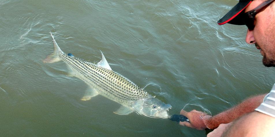 Tiger Fish and Tiger Fish Fishing from boat or bank