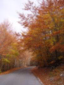 черногория октябрь 08 160.jpg