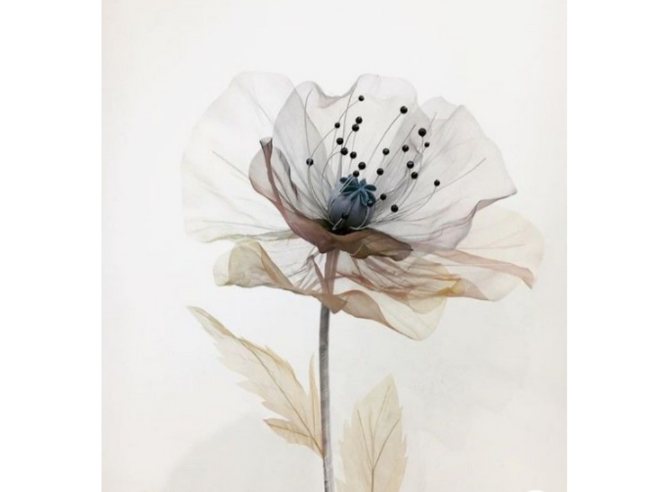 FWM WEBSITE ETHERAL FLOWER.png