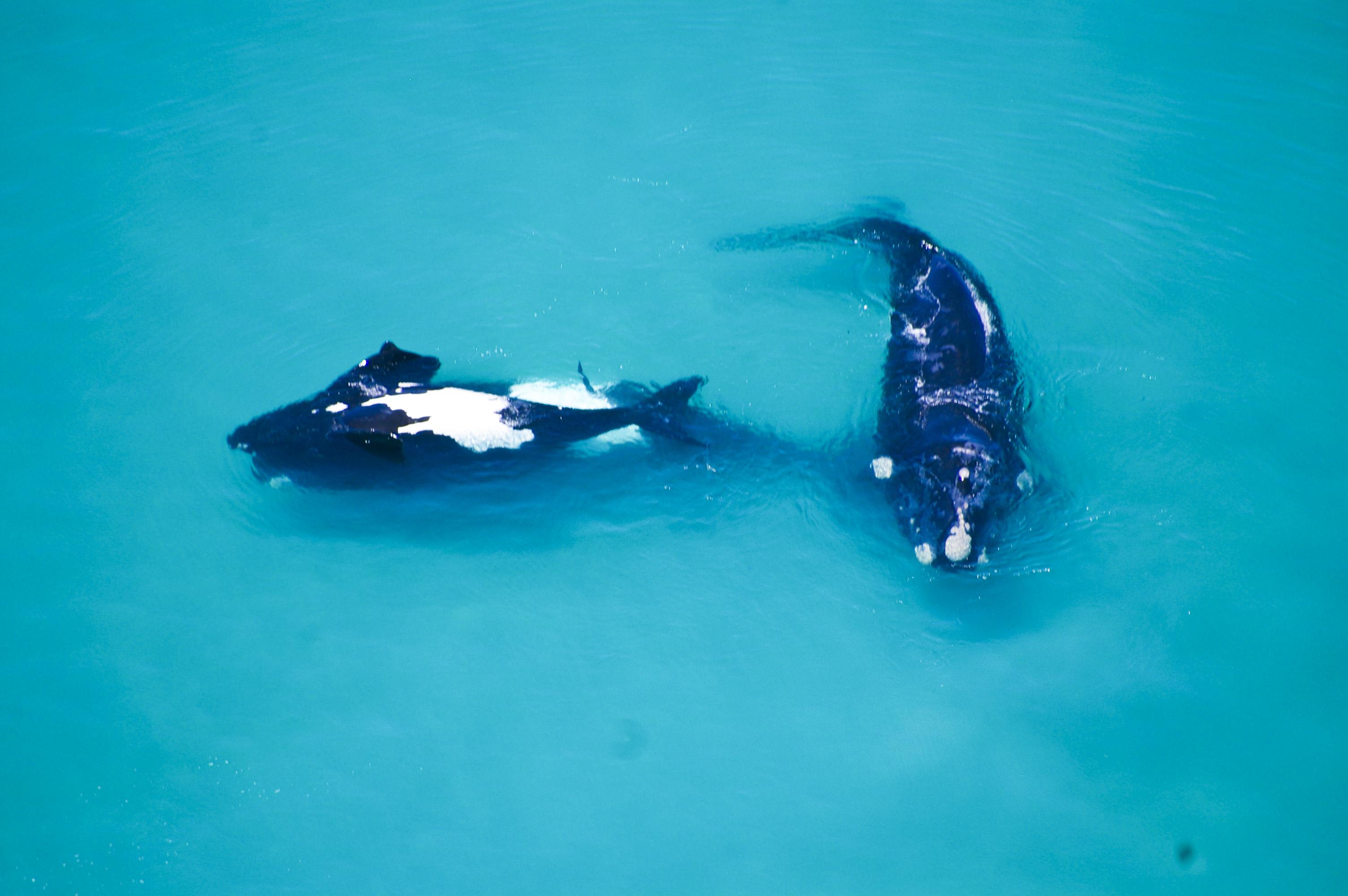 schulphoek_whales_16