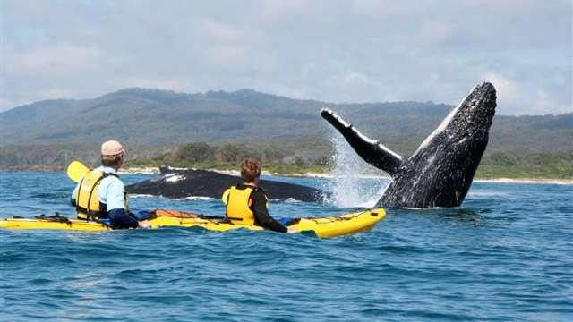 kayak-with-whales-at-point-adolphus