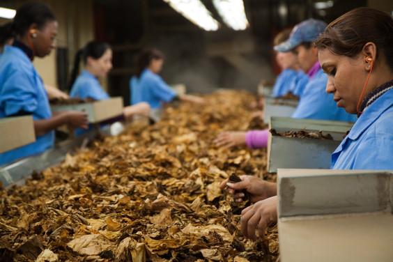 Associated Tobaco Company em Santa Cruz de Sul