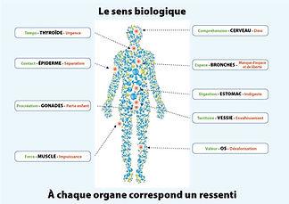 Sens-biologique2.jpg
