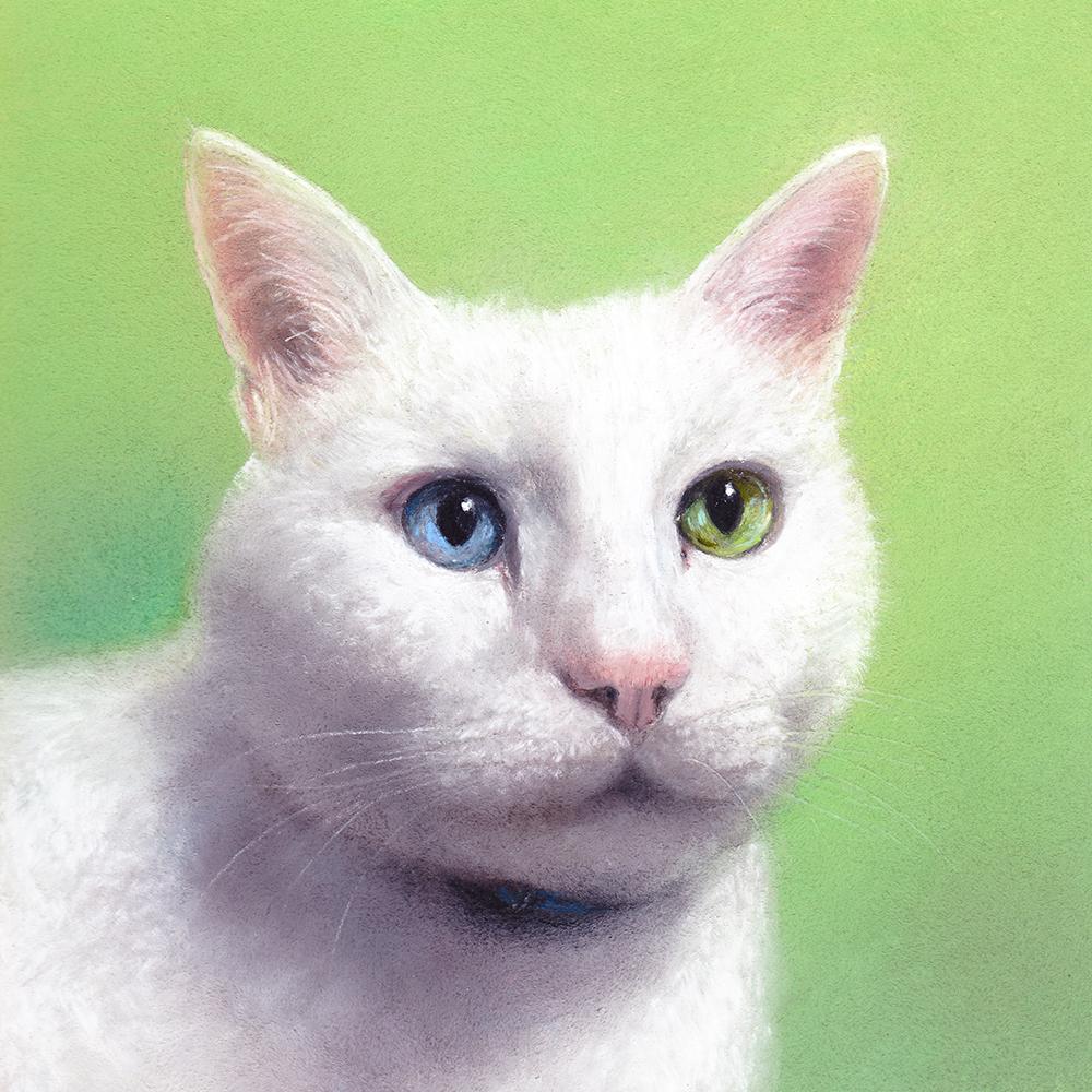 白猫(オッドアイ)