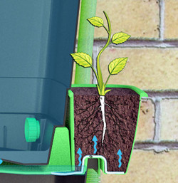Self watering water butt planters