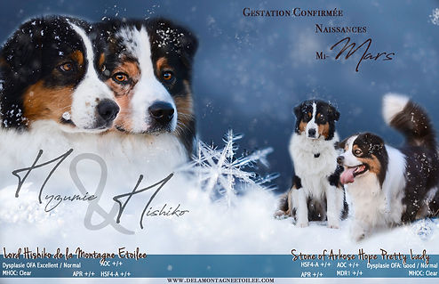 snowflake_snow_surface-632509.jpg_d-Modi