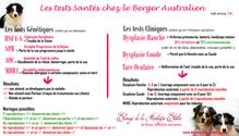 Les tests de santé du Berger Australien