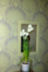 kissen sosthène kissenbezug dekokissen home accessoires münchen