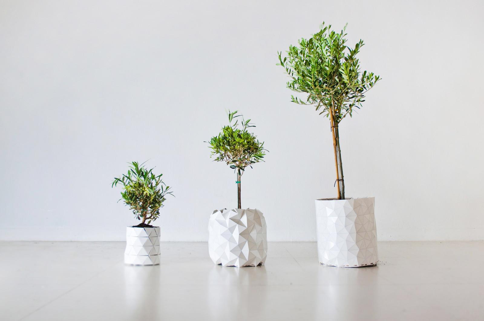 Studio Ayaskan Growth