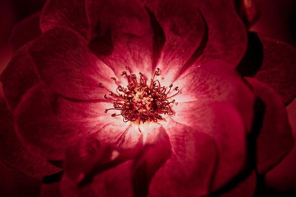 flower-1869123_1920.jpg