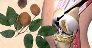 Óleo Essencial de Copaíba (Copaifera officinalis) 100% Puro Benefícios  em todos os níveis