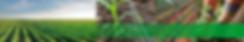 Mangueiras de polietileno americana
