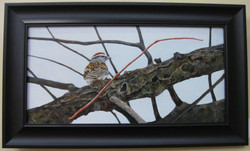 _1 Acrylics 1st JoanBarnard _ChippingSparrow_