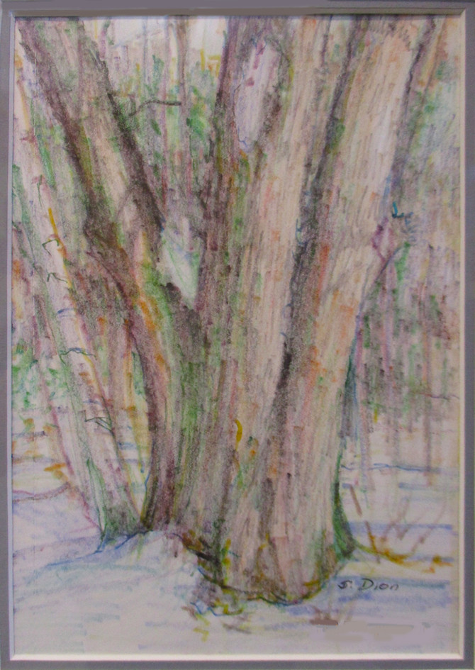 #27_Susan_Dion__Tree_Impressions__MixedM