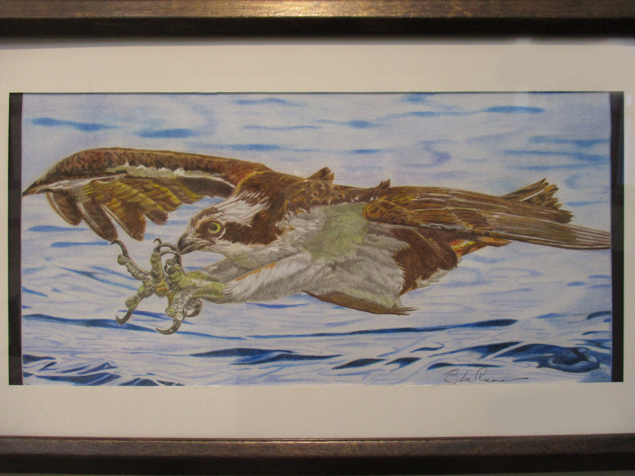 #26_Barry_LaPlume___Osprey_Fishing_____M