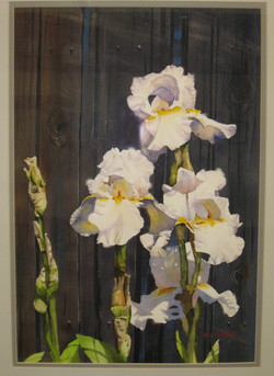 _23 Best In Show John Tomasetti _White Irises_ Watercolor
