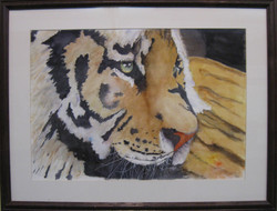 _14 Merit ChesterPalerma _Cat's Eye_ Watercolor