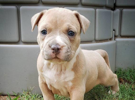 Hero x Cookie pups