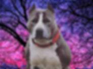 Watchdog%2520_%2523dog%2520%2523dogs%252