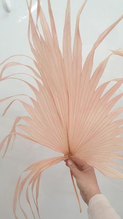 A palm leaf >