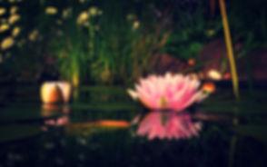 lotus-flower-blooming_edited.jpg