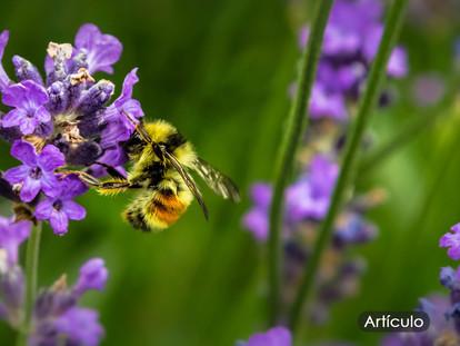 El arte de las abejas