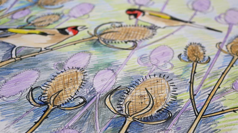 Rebecca Vincent artist Northumberland goldfinches drawing teasels