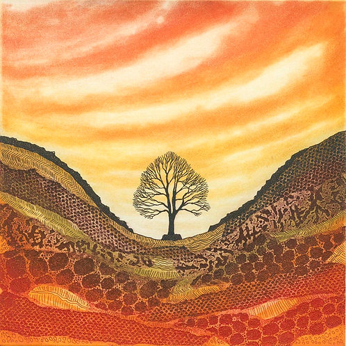Sunset Sycamore Gap etching mounted