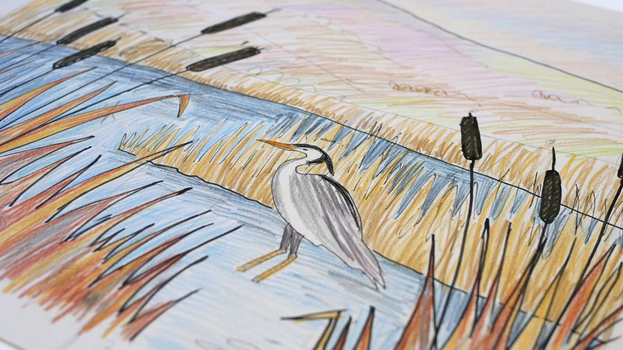Rebecca Vincent artist Northumberland grey heron drawing pond bulrushes
