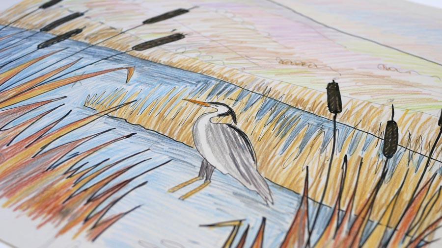 Rebecca Vincent artist Northumberland grey heron drawing pond bulrushes
