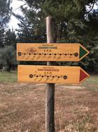 Vineyard hiking trails.