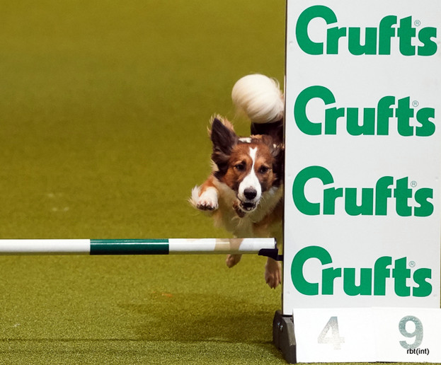 Seen at Crufts