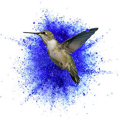 colibrí_chile.jpg