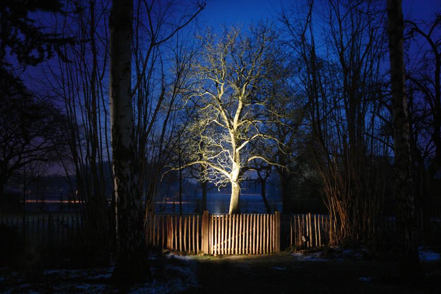 Eclairage d'un arbre