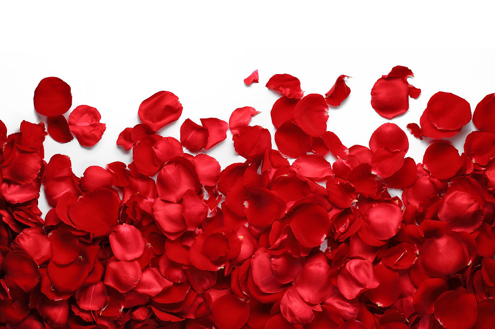 Rose petals on white ground.jpg