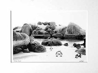 Boulders Beach Standard