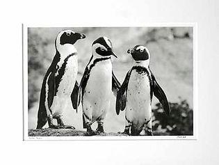 Boulders Penguin x 3