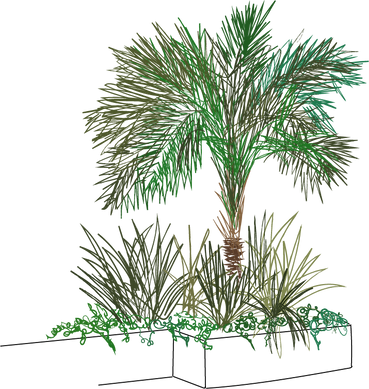 palm square ills .png