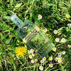 Allegra Alpine Lifestyle Gin freudig auf der Wiese.