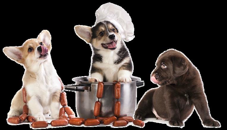dogfood-transparent.png