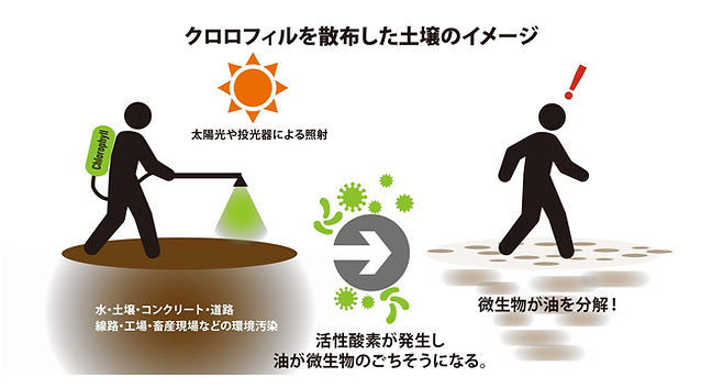 クロロフィル土壌イメージ.jpg