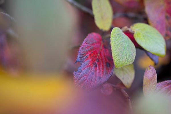 farbenreiche Blätter in gelb, rot, grün und violett