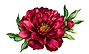 peony_watercolor_5.png
