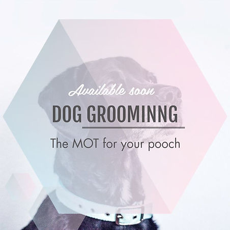 Leads & Laces Dog Grooming.jpg