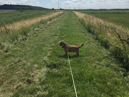 Lovely Walk in Alkborough With Baxter