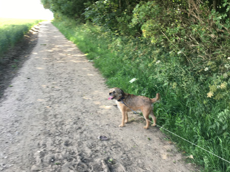 Walk to Welton Wold with Baxter