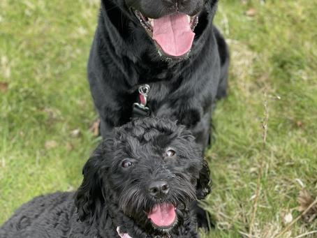 Everyone meet Bella & Lola! 🐶🐾