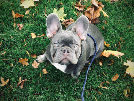 Meet Louis!