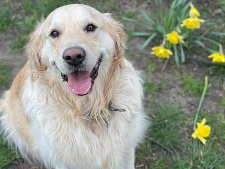 Dog walks with Jasper