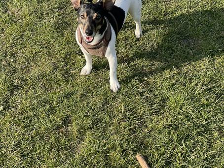Dog walks with Rocky